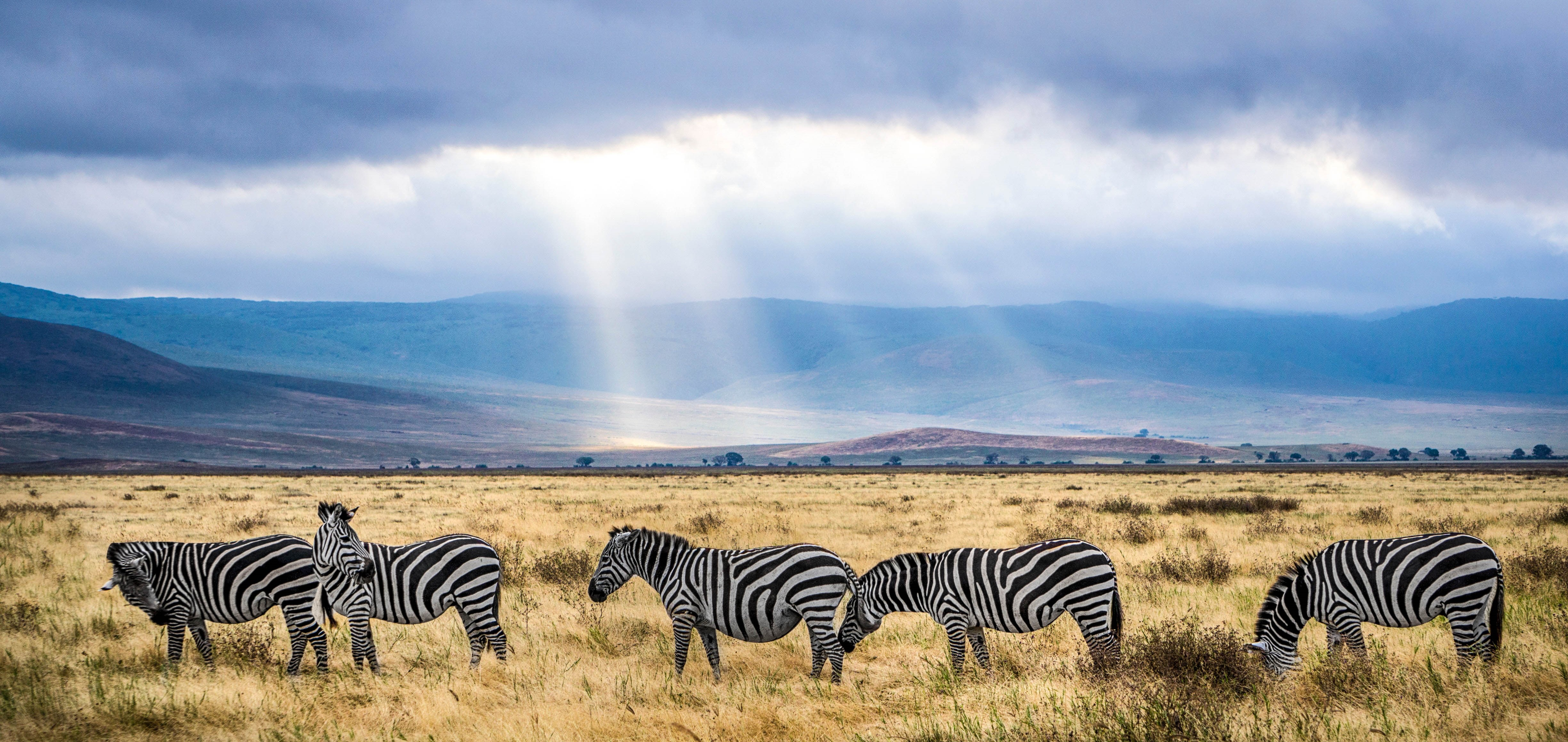 Amazing Safaris Destinations